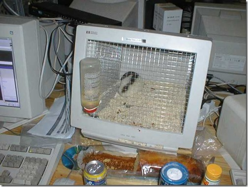 hamster_monitor